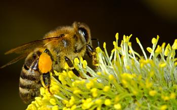 api, alveari, biodiversita, monica pelliccia