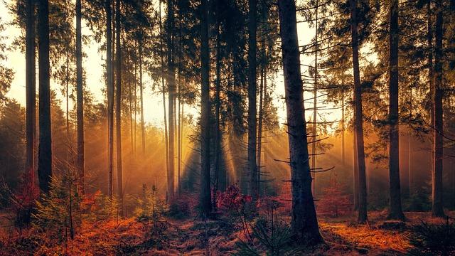 Treedom, sitoweb, alberi a distanza