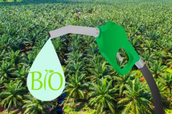 olio di palma, biodiesel, biocarburante, deforestazione