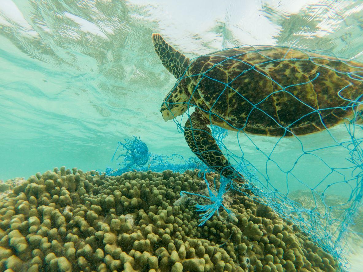 inquinamento oceani, plastica, ecosistema marino