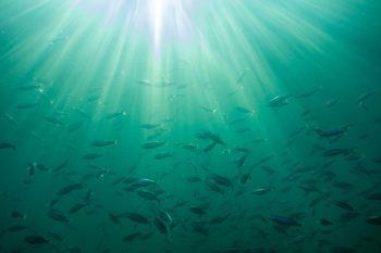 giornata mondiale degli oceani, ecosistema