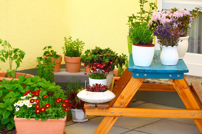orto sul balcone e garden therapy
