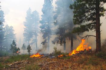 incendi, pefcitalia, boschi, prevenzione