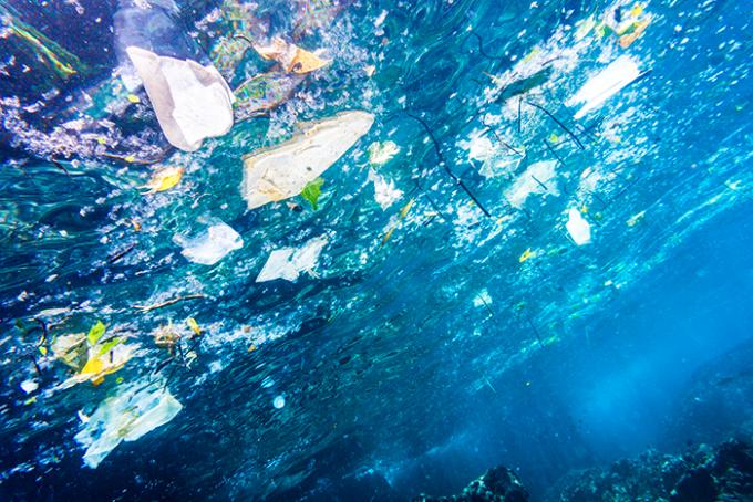 meduse, rifiuti, plastici, ponza