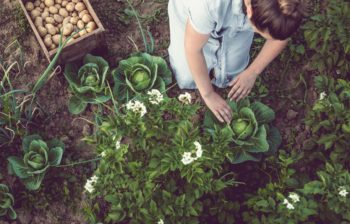 agricoltura biodinamica, sebastian ghetta, soreie