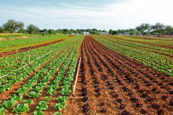 cibo, agricoltura, spreco, gas serra