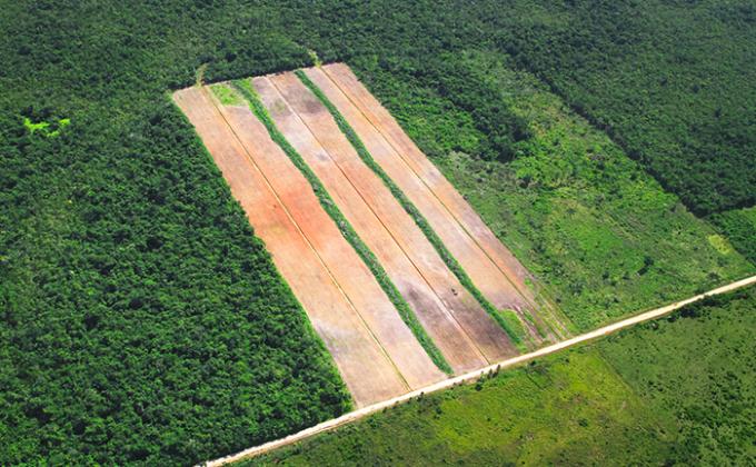agricoltura, allevamento, urbanizzazione, deforestazione, incendi