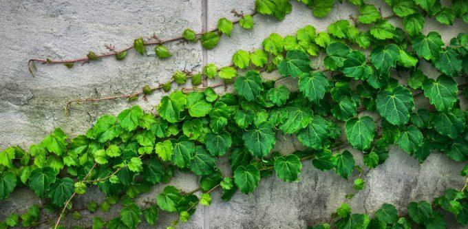 cemento green, emissioni co2, economia circolare