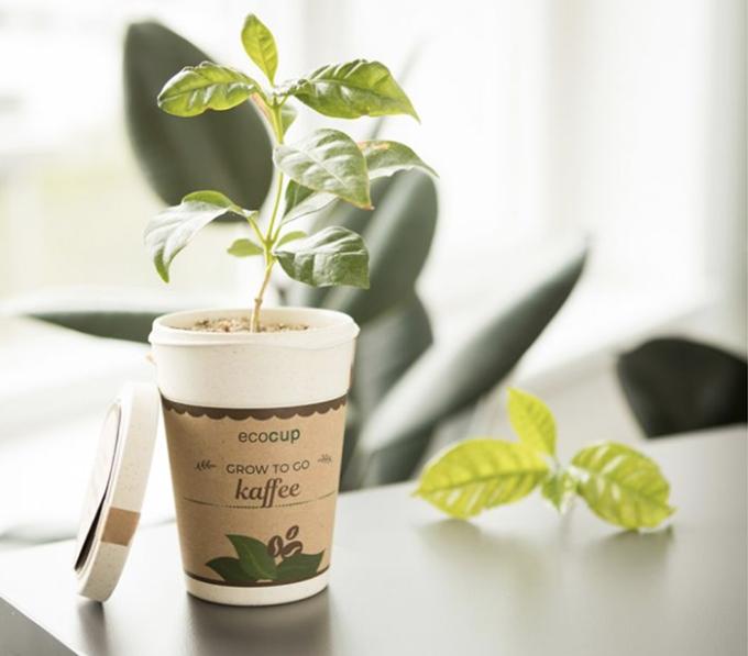 regalo vegetale, natale verde, pianta