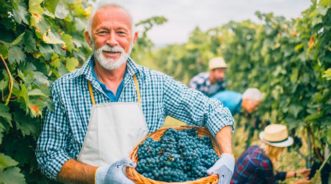 vino, produzione, sostenibilita, oiv, wine
