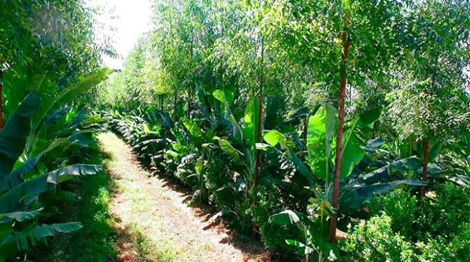 agricoltura sintropica, ernst gotsch, natura