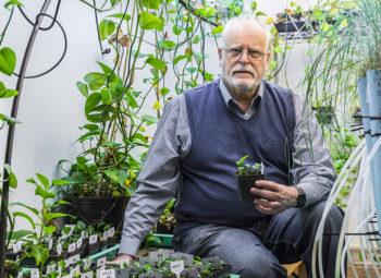 pianta mangia smog, pothos, inquinamento indoor