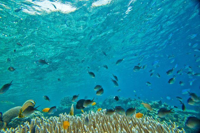 cambiamento climatico, pesci, pesca, biodiversita