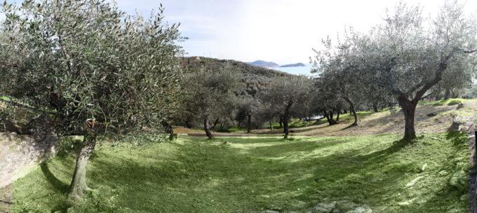 frantoi, liguria, olio di oliva, agricoltura biologica