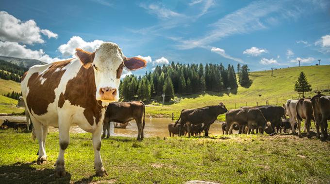 svizzera, emissioni, metano, bovini, dieta, microbiota