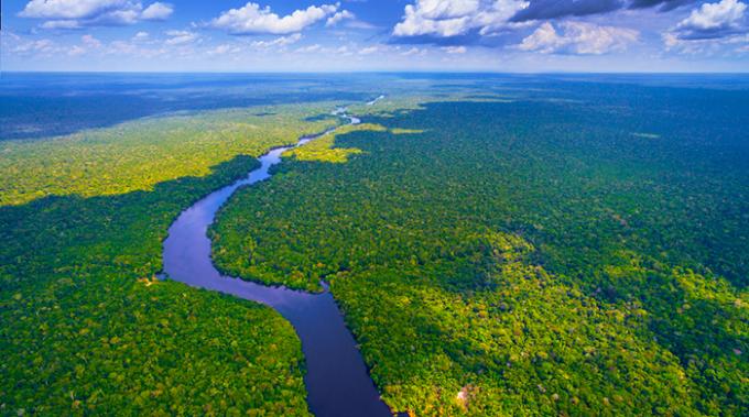 alberi, pianeta, politecnico zurigo, climate change