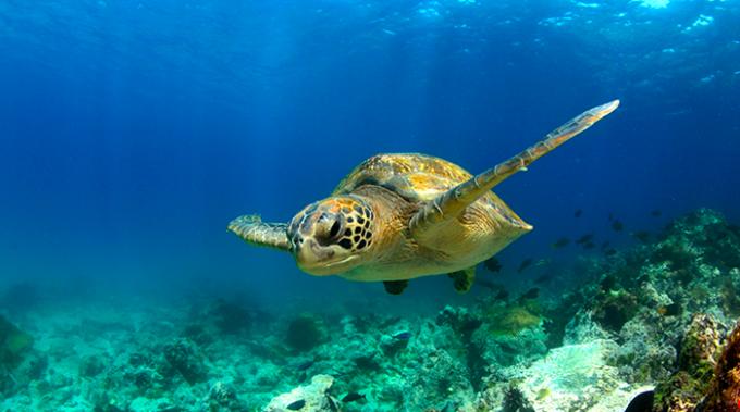 tartarughe, mediterraneo, estinzione, plastica