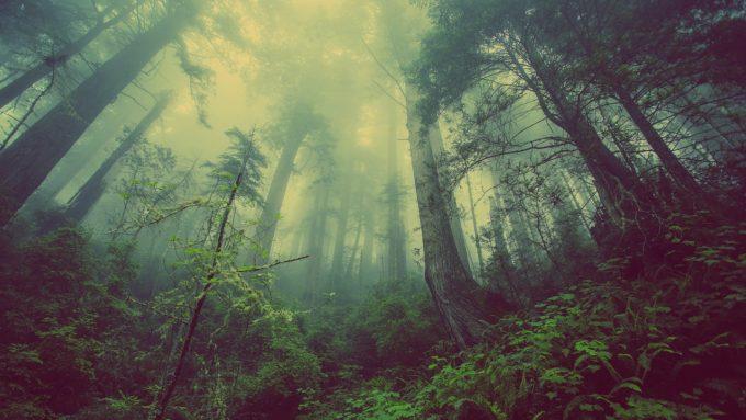 albero, laudatosì, riforestazione, riscaldamento globale