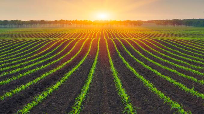 agricoltura biologica, cibo, emissioni co2