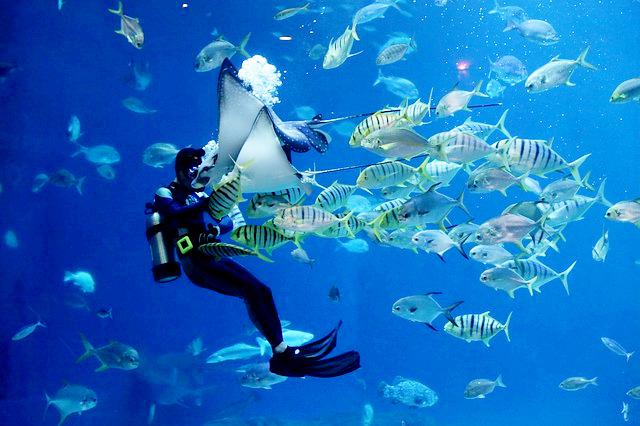 sostenibilità Riccardo Bonadeo oceani microplastiche Mediterraneo mare inquinamento imprese ecosistemi marini Business for Ocean Sustainability Blue economy biodiversità basso impatto ambientale