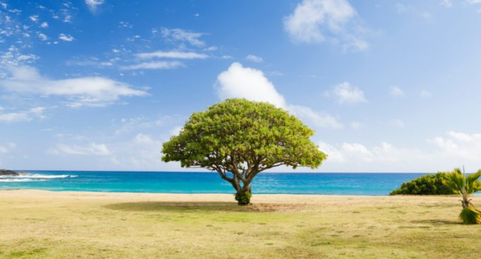 Regali sostenibili: un albero a distanza