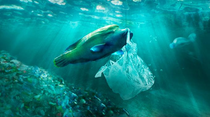 pesci, plastica, ispra, mediterraneo