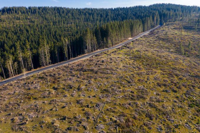 Disboscamento foreste Romania