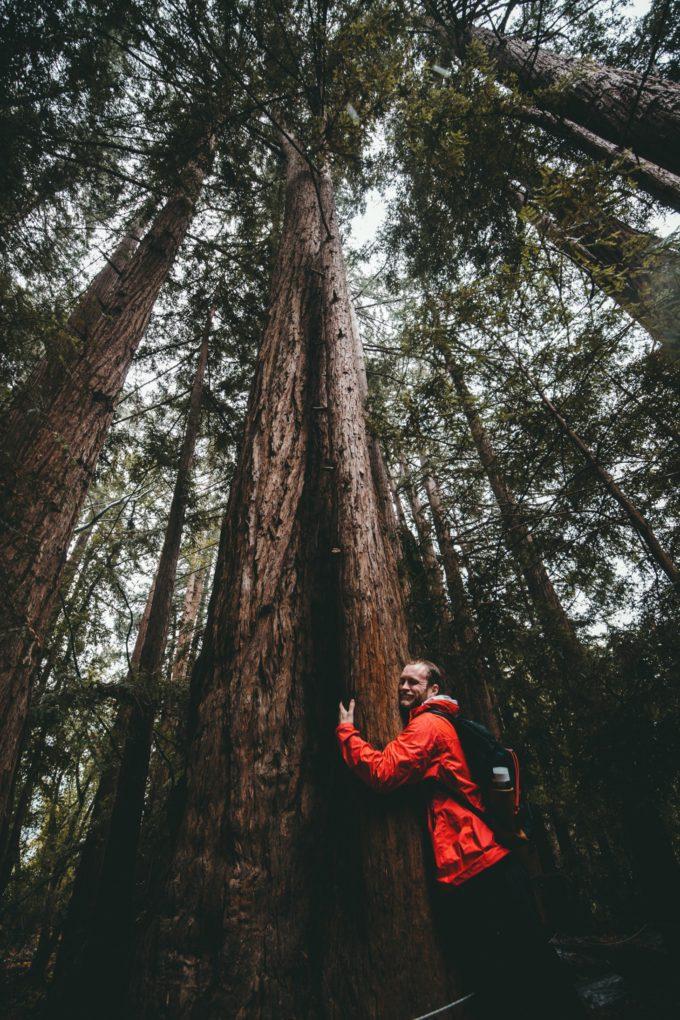 Un uomo abbraccia un albero