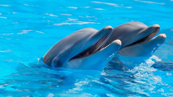reti pescatori Life Delfi Delfini spiaggiati delfini