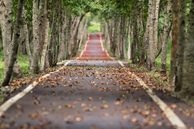 Strada con alberi ai due lati
