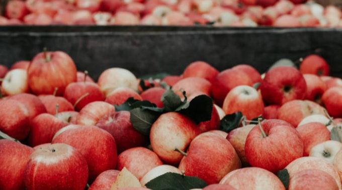 raccolto di mele
