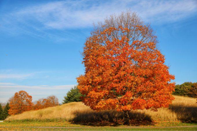 Alberoin autunno