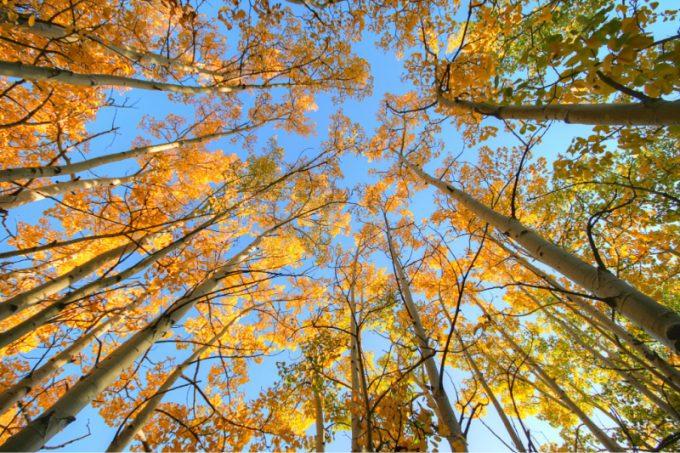 Foliage in Colorado (USA)