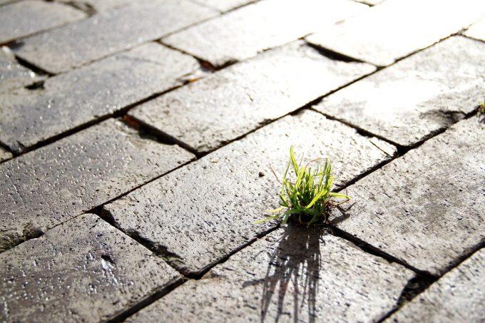 Consumo di suolo: erba che spunta dal cemento