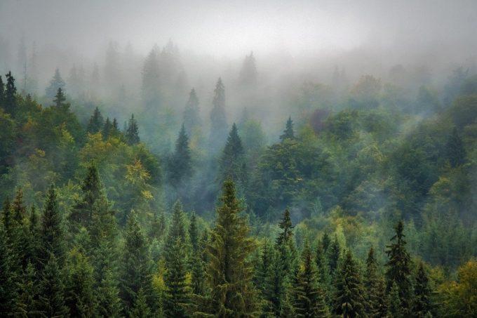 Boschi e foreste