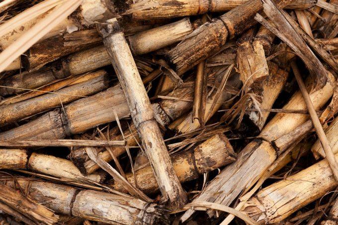 biomassa e bionenergie