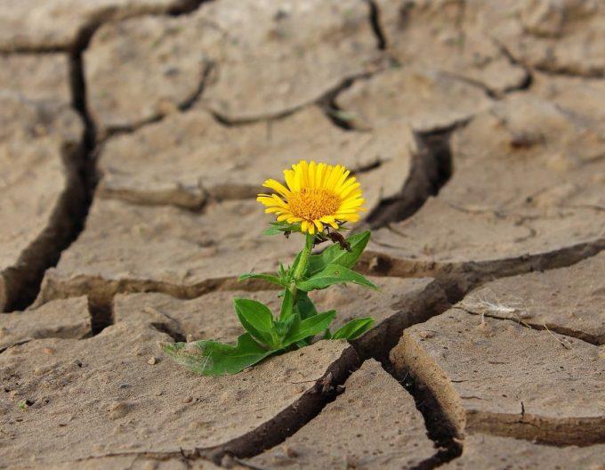 siccità e desertificazione