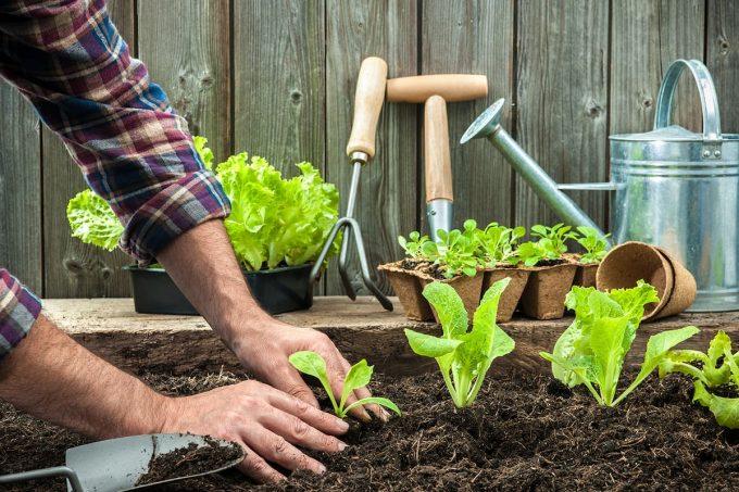 Come fare l'orto