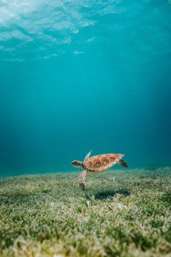tartaruga nell'oceano