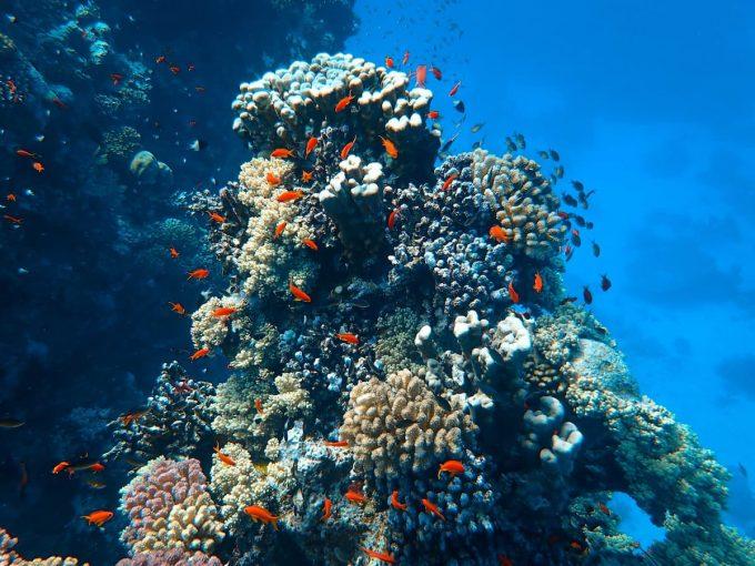 Pesci e corallo nell'oceano
