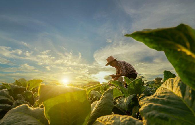 Agricoltore in un campo