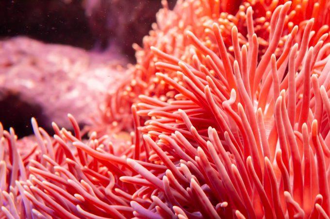 Corallo in mare