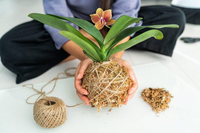 Kokedama con orchidea