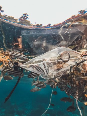 plastica in mare: marine litter