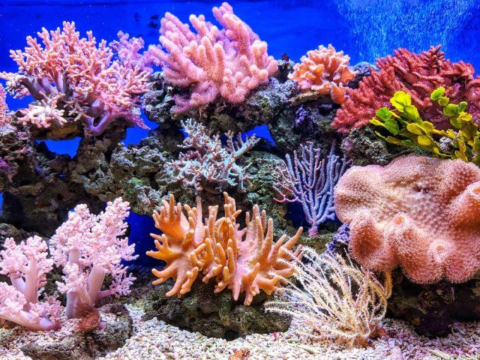 Coralli e acidificazione degli oceani
