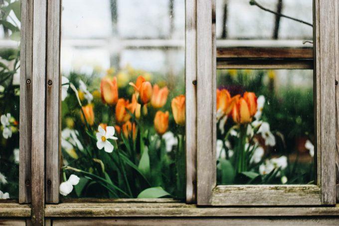 Fiori e tulipani