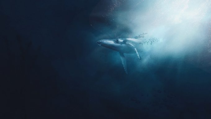 cetaceo