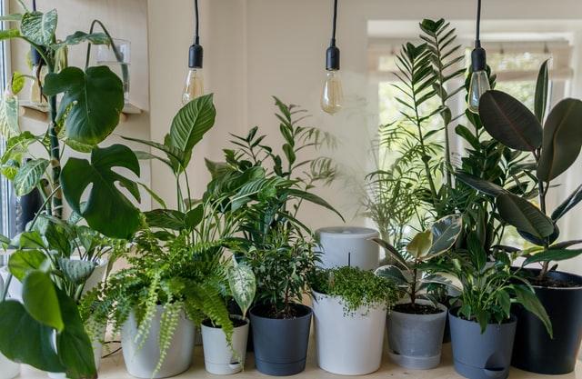 piante_foto_vadim