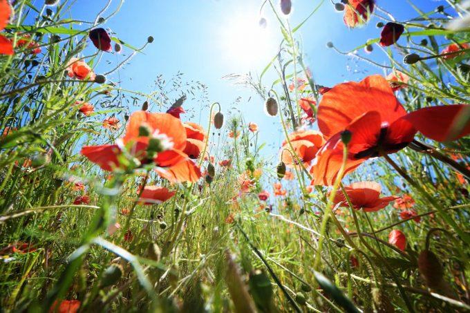 La biodiversità in un prato fiorito