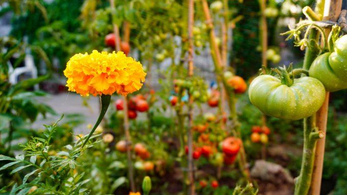 coltivazione con permacultura